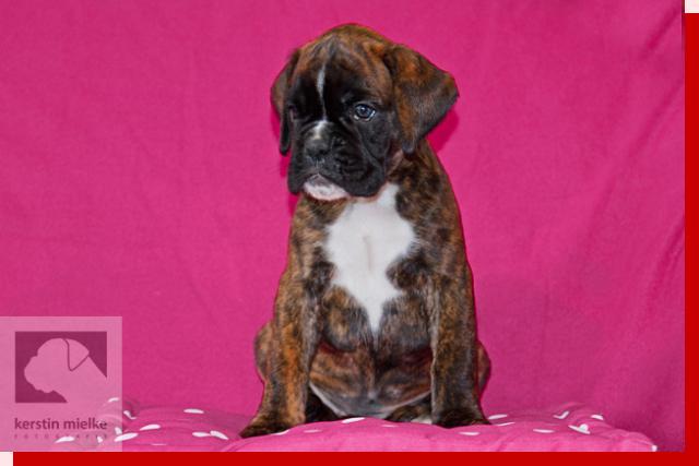 Meggi von Preussens Eden geboren: 17.12.2011