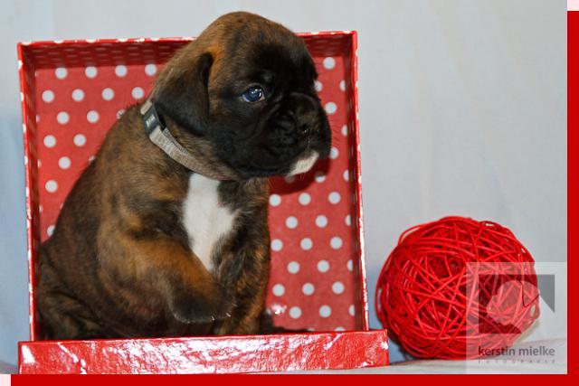 Mutta von Preussens Eden geboren: 17.12.2011