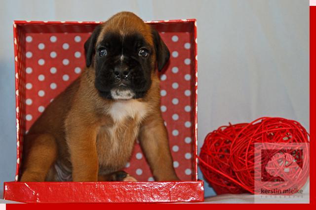 M&uumlller von Preussens Eden geboren: 17.12.2011