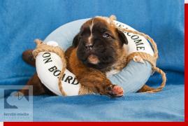 Nova von Preussens Eden geboren: 21.05.2012