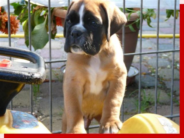Gregor von Preussens Eden geboren: 04.07.2009