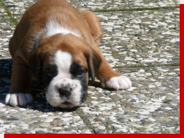 Goere von Preussens Eden geboren: 04.07.2009