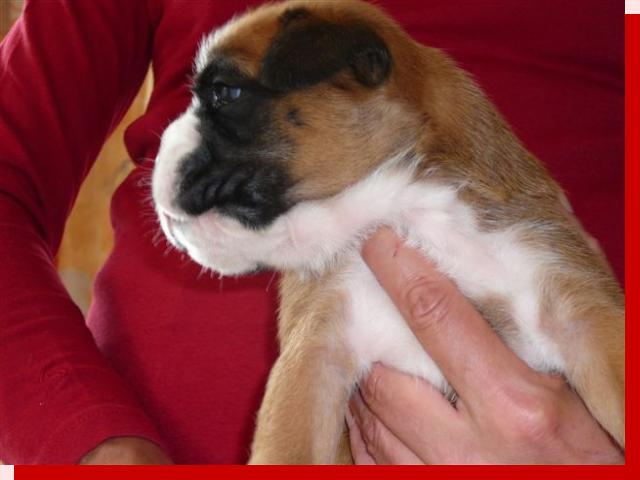 Grete von Preussens Eden geboren: 04.07.2009