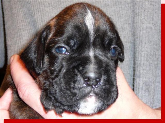 Hella von Preussens Eden geboren: 20.11.2009