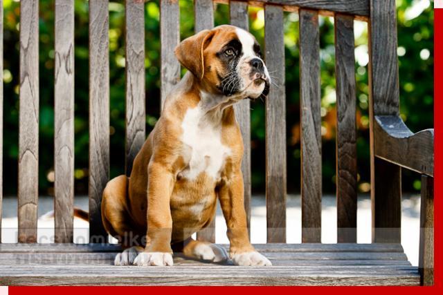Kayenne von Preussens Eden geboren: 02.05.2011