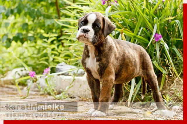 Klementine von Preussens Eden geboren: 02.05.2011