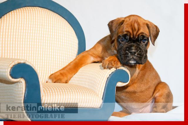Lausbub von Preussens Eden geboren: 02.06.2011