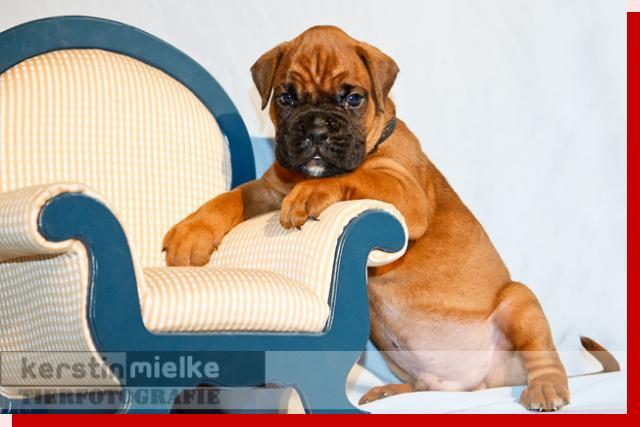 Lennox von Preussens Eden geboren: 02.06.2011