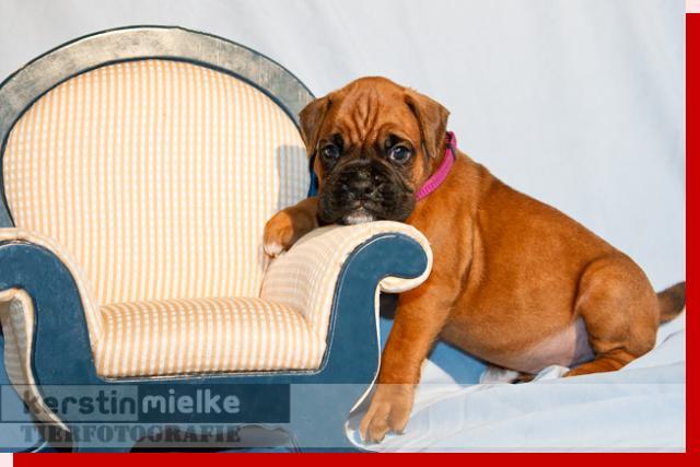 Leopold von Preussens Eden geboren: 02.06.2011