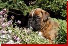 Quo von Preussens Eden geboren: 07.08.2012