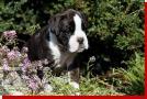 Querida von Preussens Eden geboren: 07.08.2012