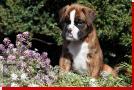 Quita von Preussens Eden geboren: 07.08.2012