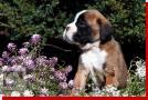 Pelle von Preussens Eden geboren: 07.08.2012