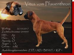 Vitus vom Pfauenthront Wurftag: .. Zuchtbuchnummer: 239058